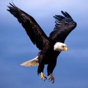 Eagle57