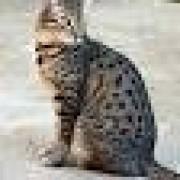 kitty2@