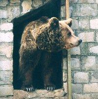Топлото време събуди мечките в столичния зоопарк