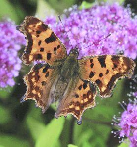 Столичният зоопарк вече и със зала с пеперуди