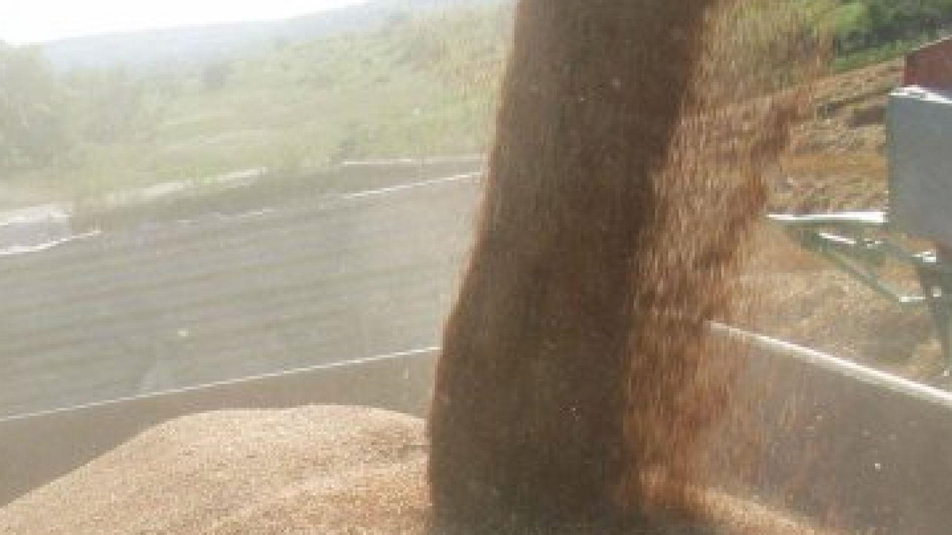 Под 1 млн. т. реколтата от хлебна пшеница