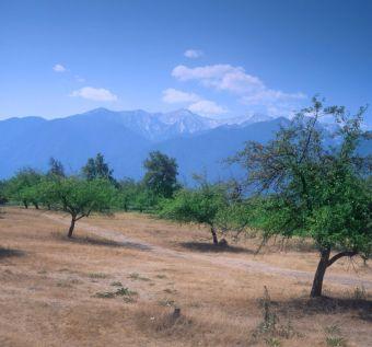 Еколози: Изсичат Пирина за два нови курорта