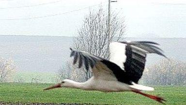 ЧЕЗ ще спасява застрашени птици