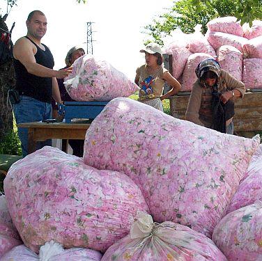 Изнасяме кисело мляко с рози в Япония