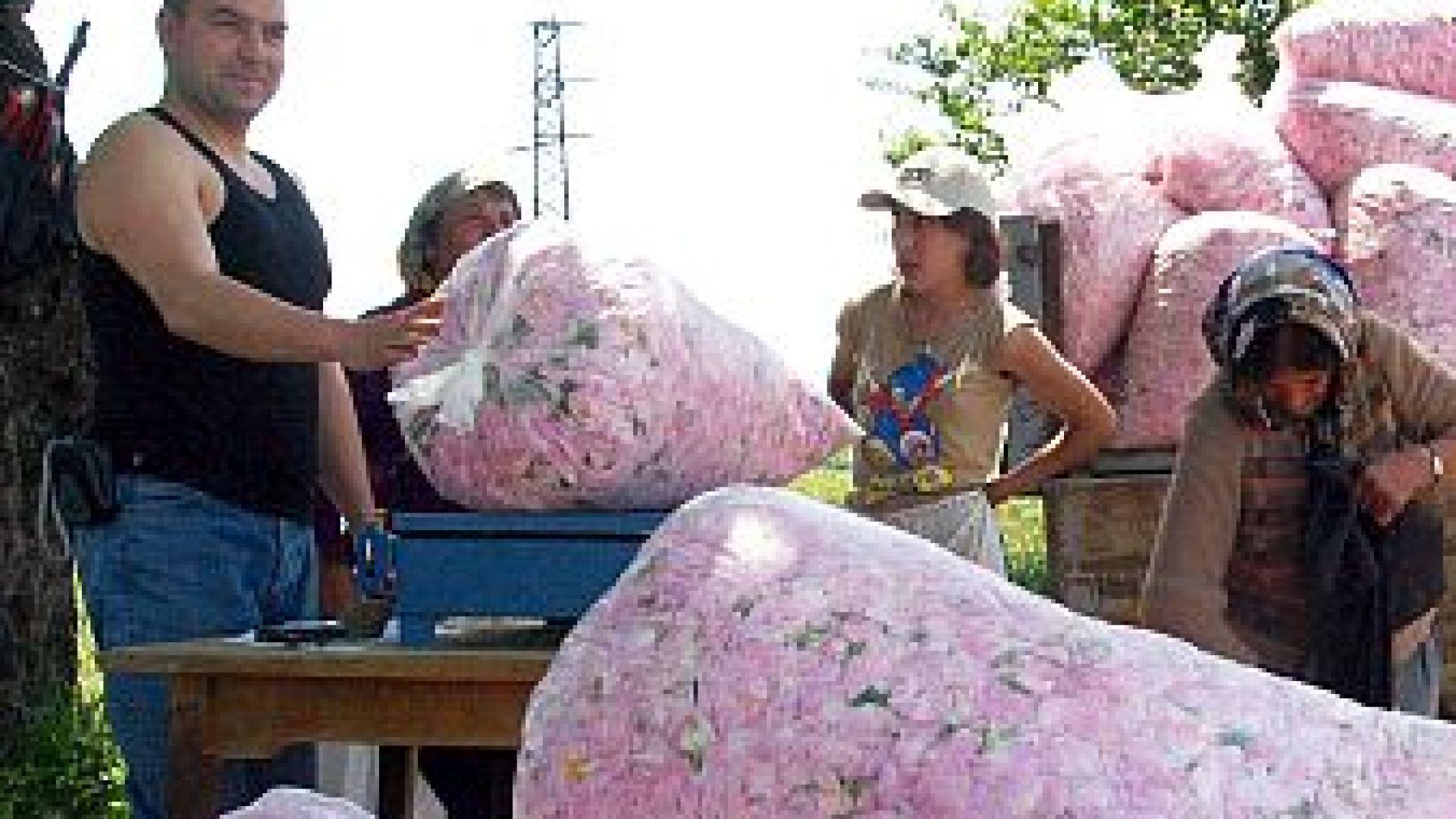Розопроизводителите получиха помощ от 51.5 лв. на декар