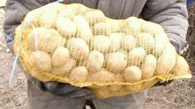 Картофите поскъпнаха с 250% за година