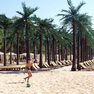 Варна слага още 65 палми в града