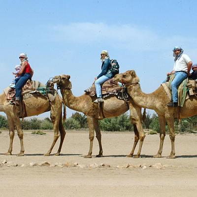 Избиват хиляди камили със снайпери в Австралия