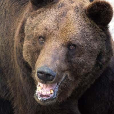 БНТ в 100 секунди: Искат да изселят мечките в Смолянско