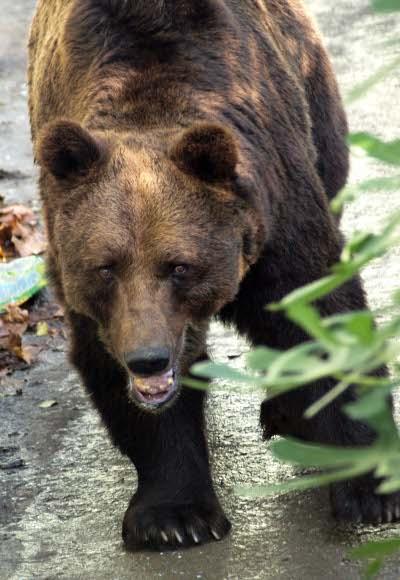 Само зоопаркът в Добрич отговаря на изискванията на ЕС
