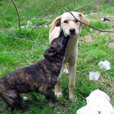 Искат 480 000 лв. кръвнина за убито от кучета дете