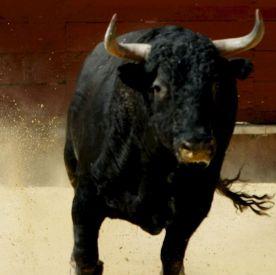 Бик уби 39-годишен пастир