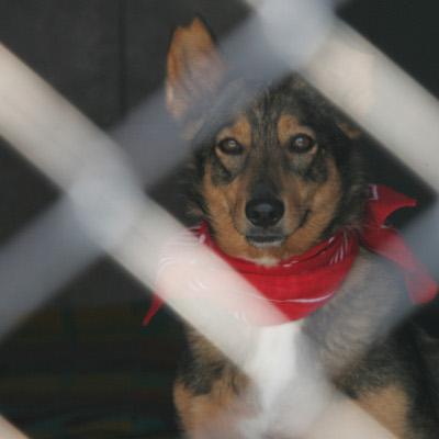 Собственици на кучета увеличили броя на бездомните