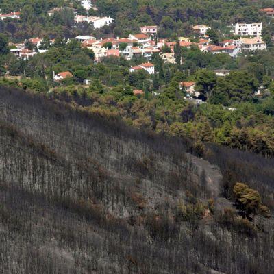 Пожарът край Атина тръгнал от гнездо на оси