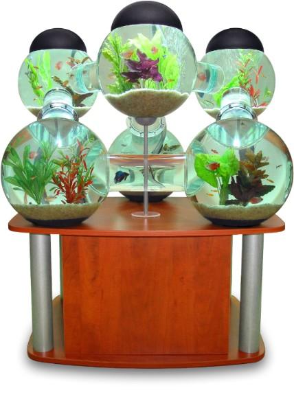 Лабиринтов аквариум прави декоративните рибки щастливи