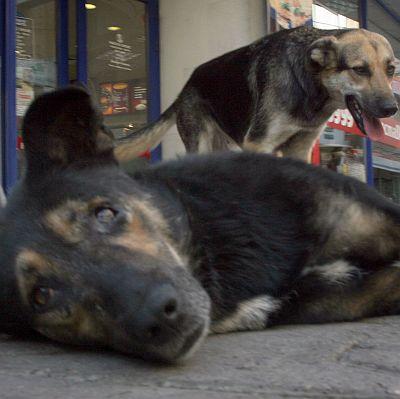 И вторият мъж, нахапан от кучета, почина
