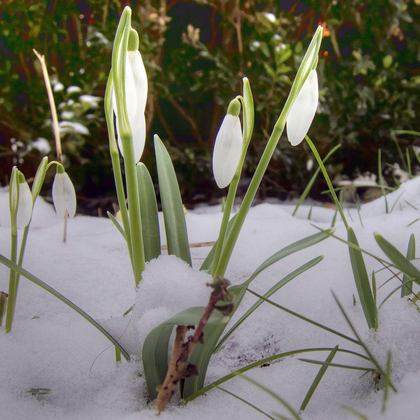 Седмична прогноза: зимата губи инициативата