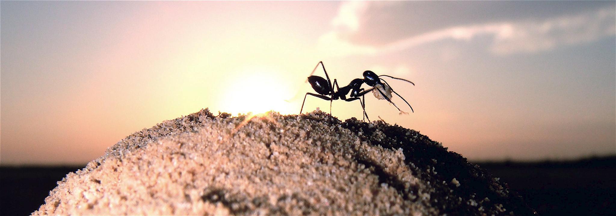 Мравките живеят в свой Facebook