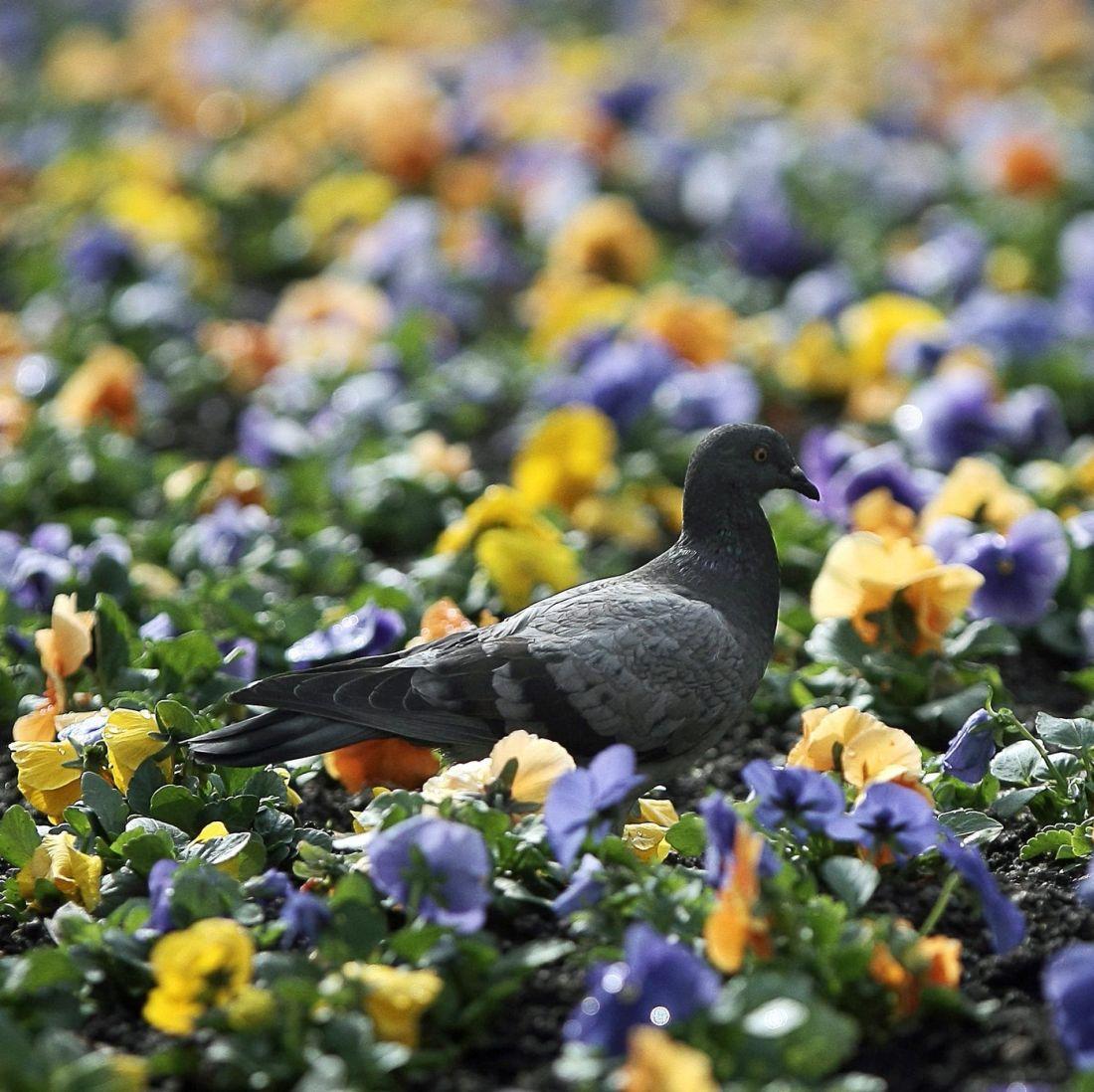 Пролетта идва от сряда!