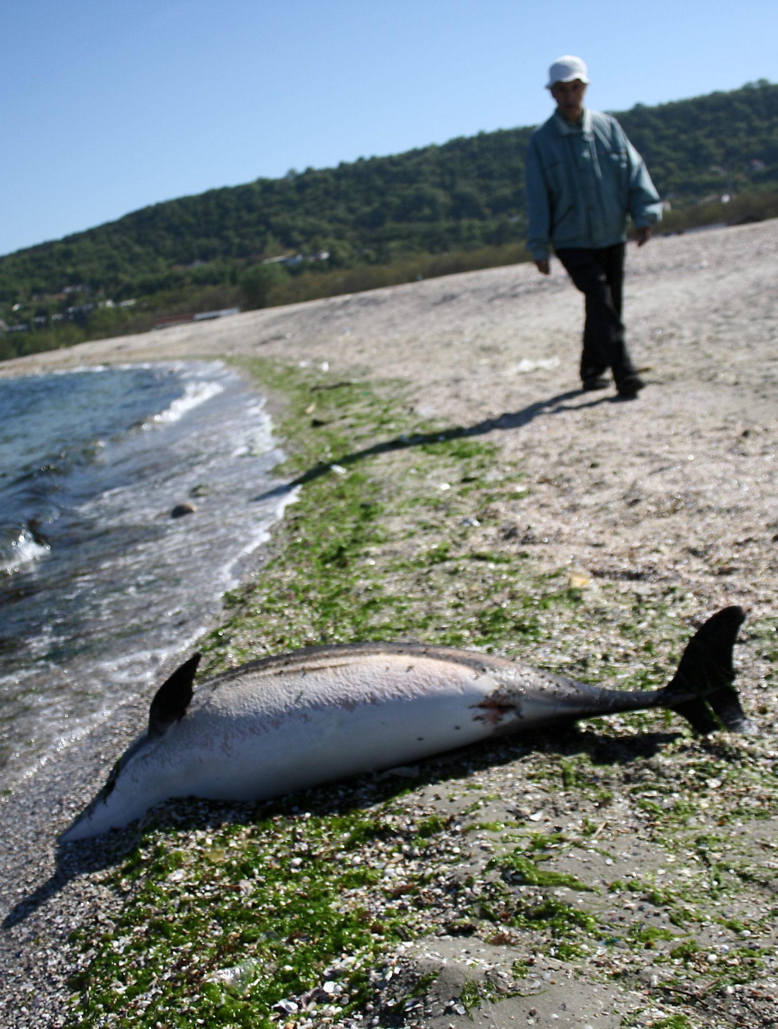 Рибари убивали делфините за пържоли