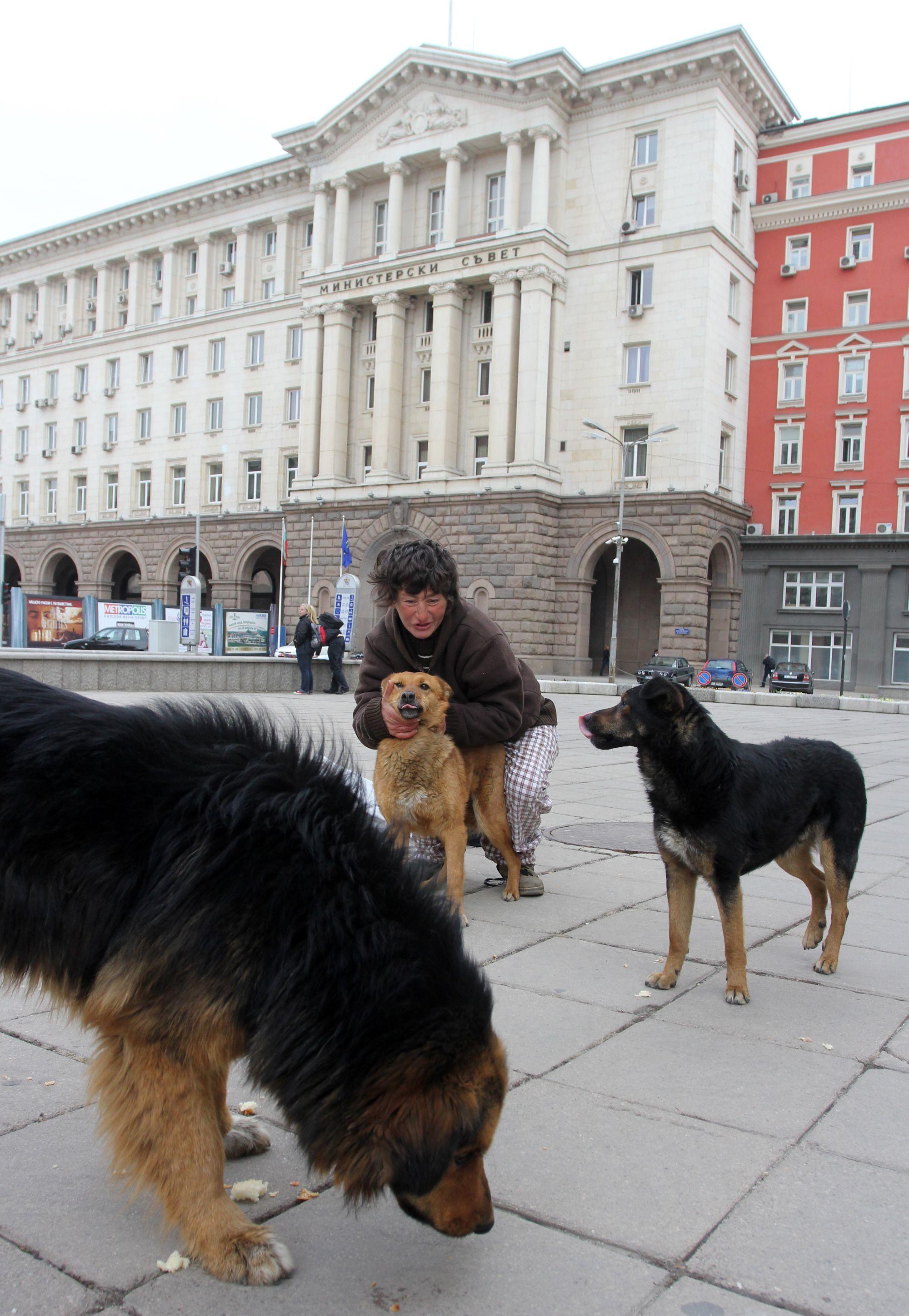 ГЕРБ: Всички кучета с чип, 1000 лв. глоба за изоставено