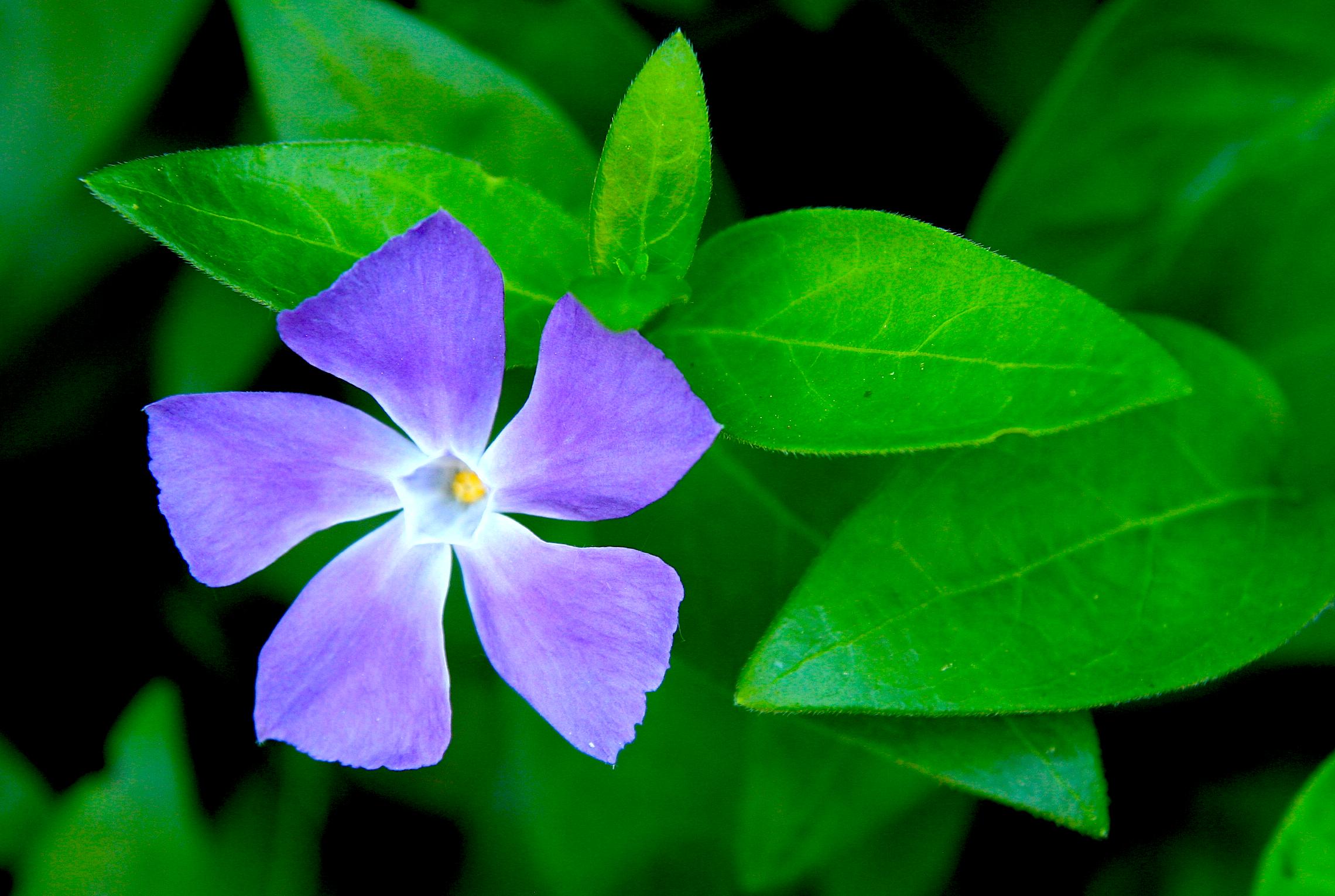 Доказаха, че растенията общуват помежду си