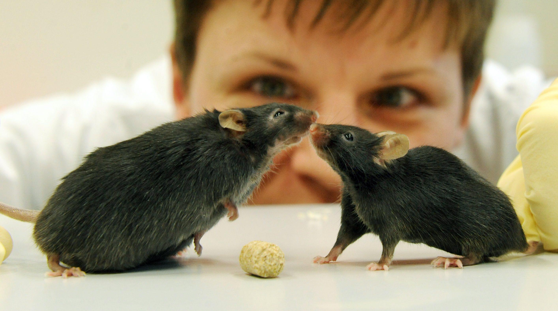 Учени накараха парализирани мишки да ходят
