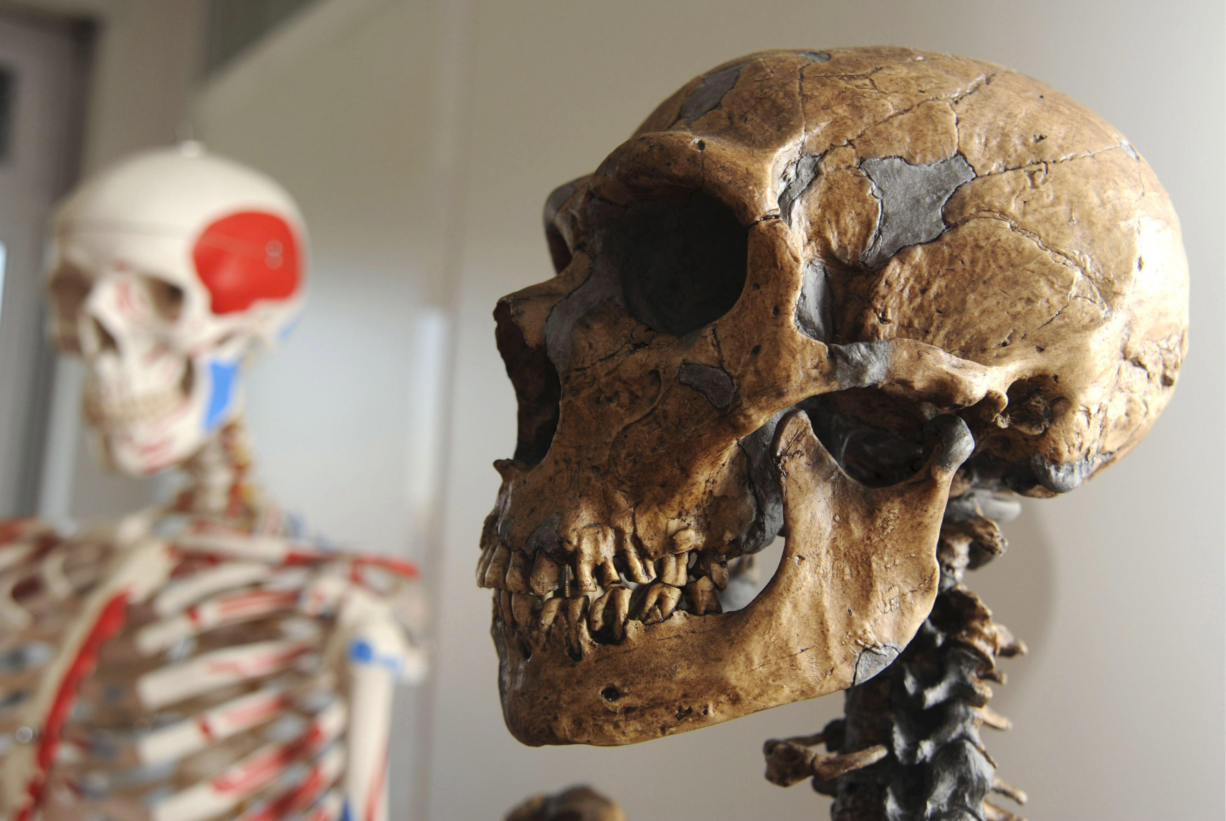Открили нов човешки вид в Кения