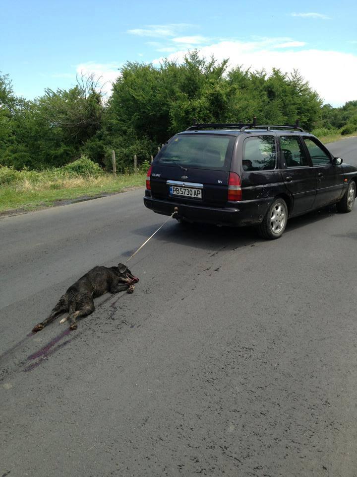 Условна присъда за мъжа, влачил с колата си куче