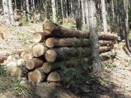 МЗХ: 80 000 домакинства вече са закупили дърва за огрев