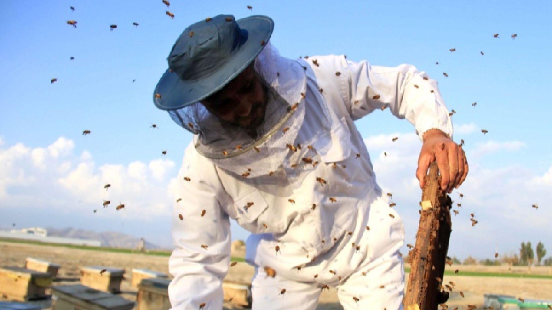 Добивът на пчелен мед спаднал с 60% през 2018 г.