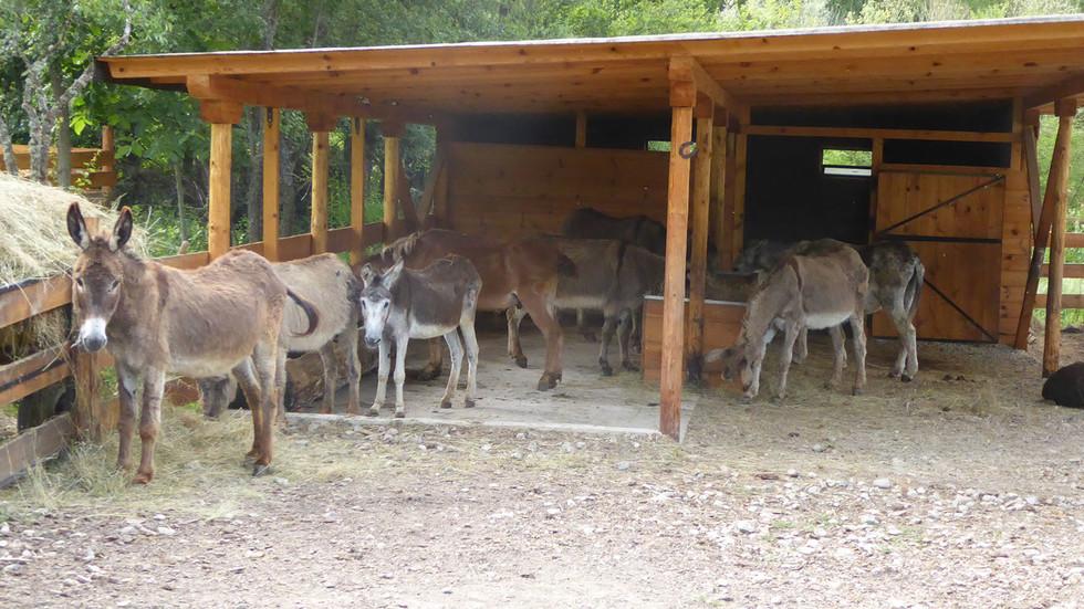 Швейцарци откриват първия приют за магарета у нас