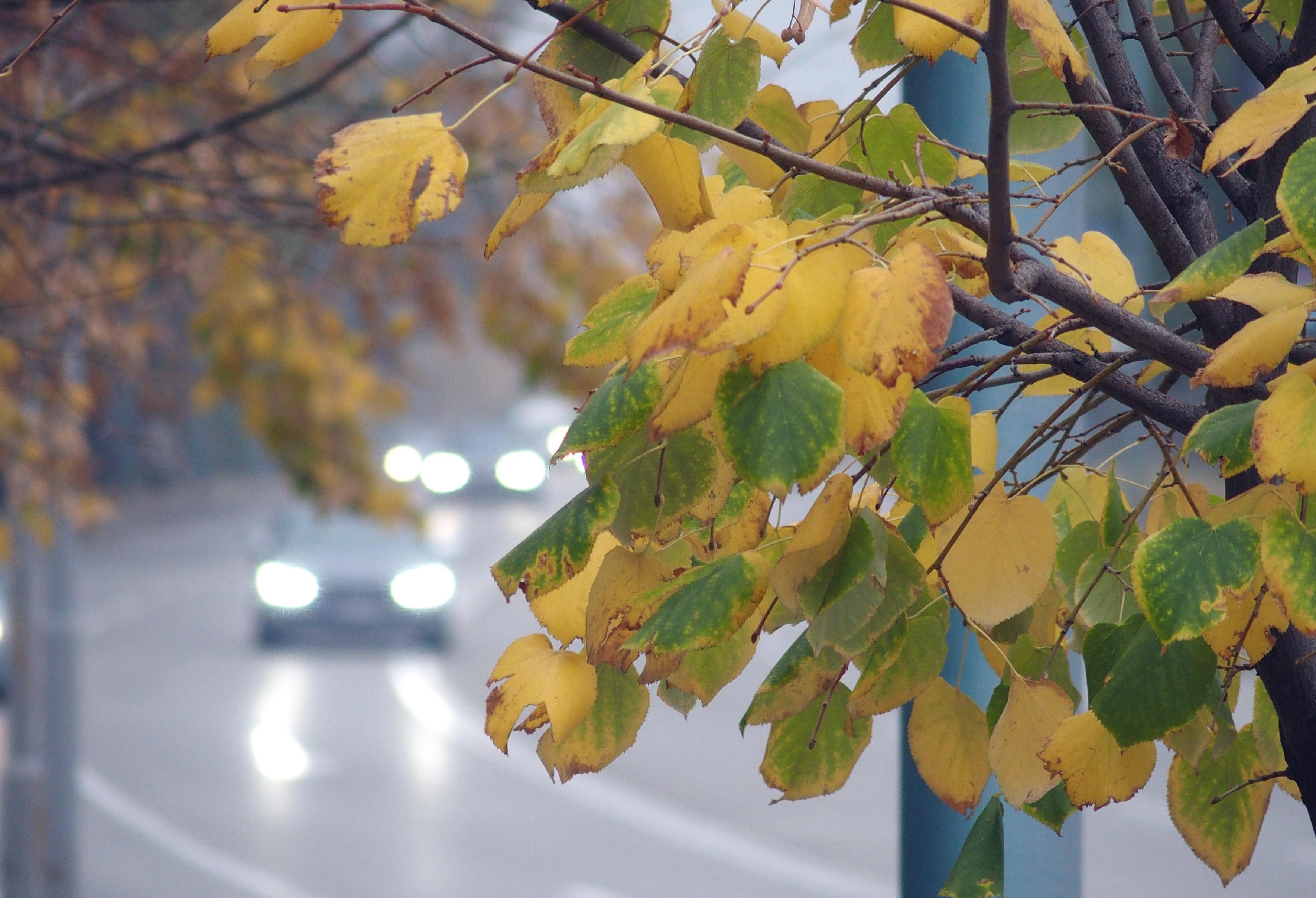 Седмична прогноза: динамично, по-топло през уикенда