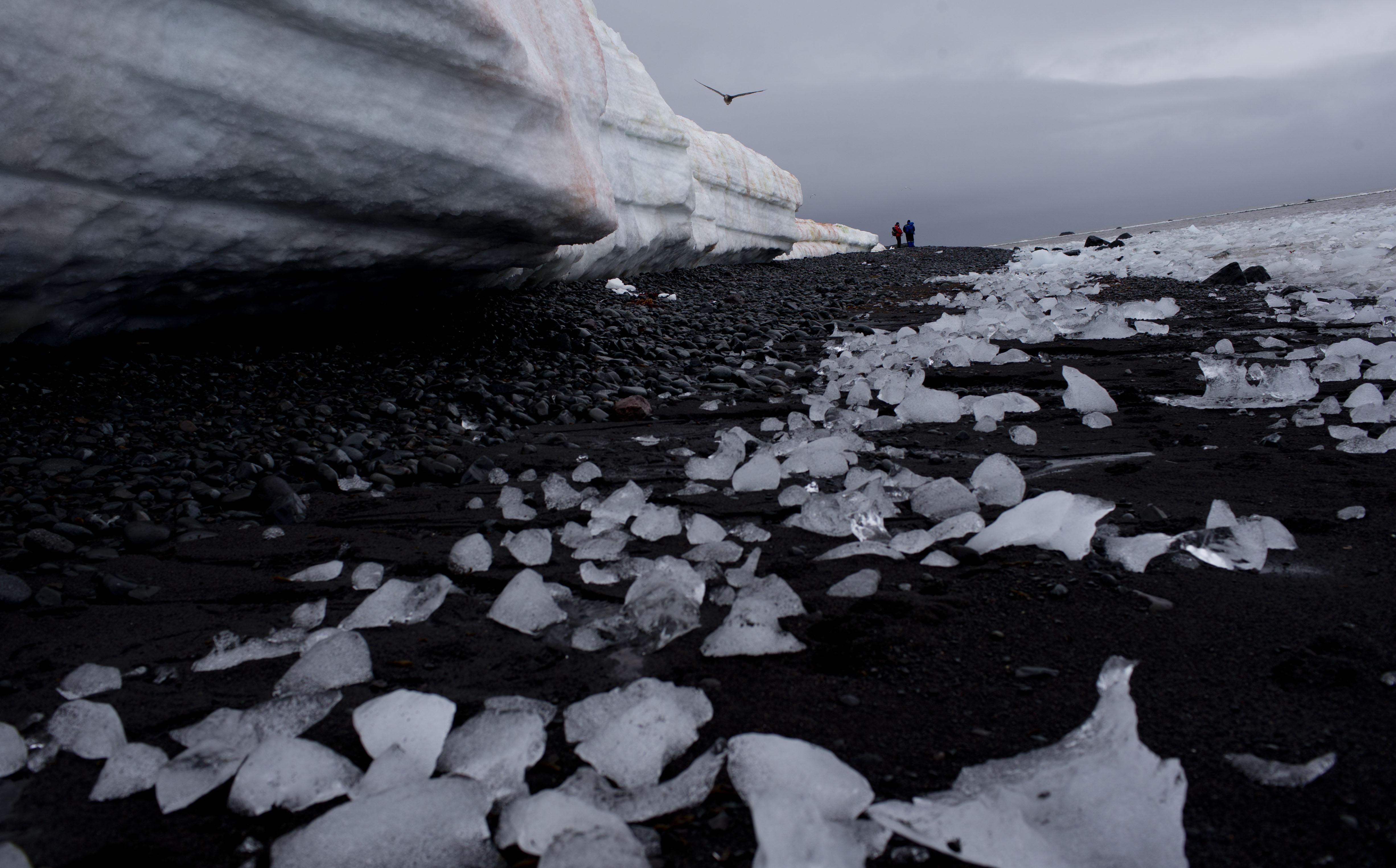 Създават около Антарктида най-големия морски резерват