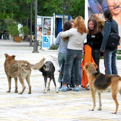 Глутница кучета нападна и уби жена в свищовско село