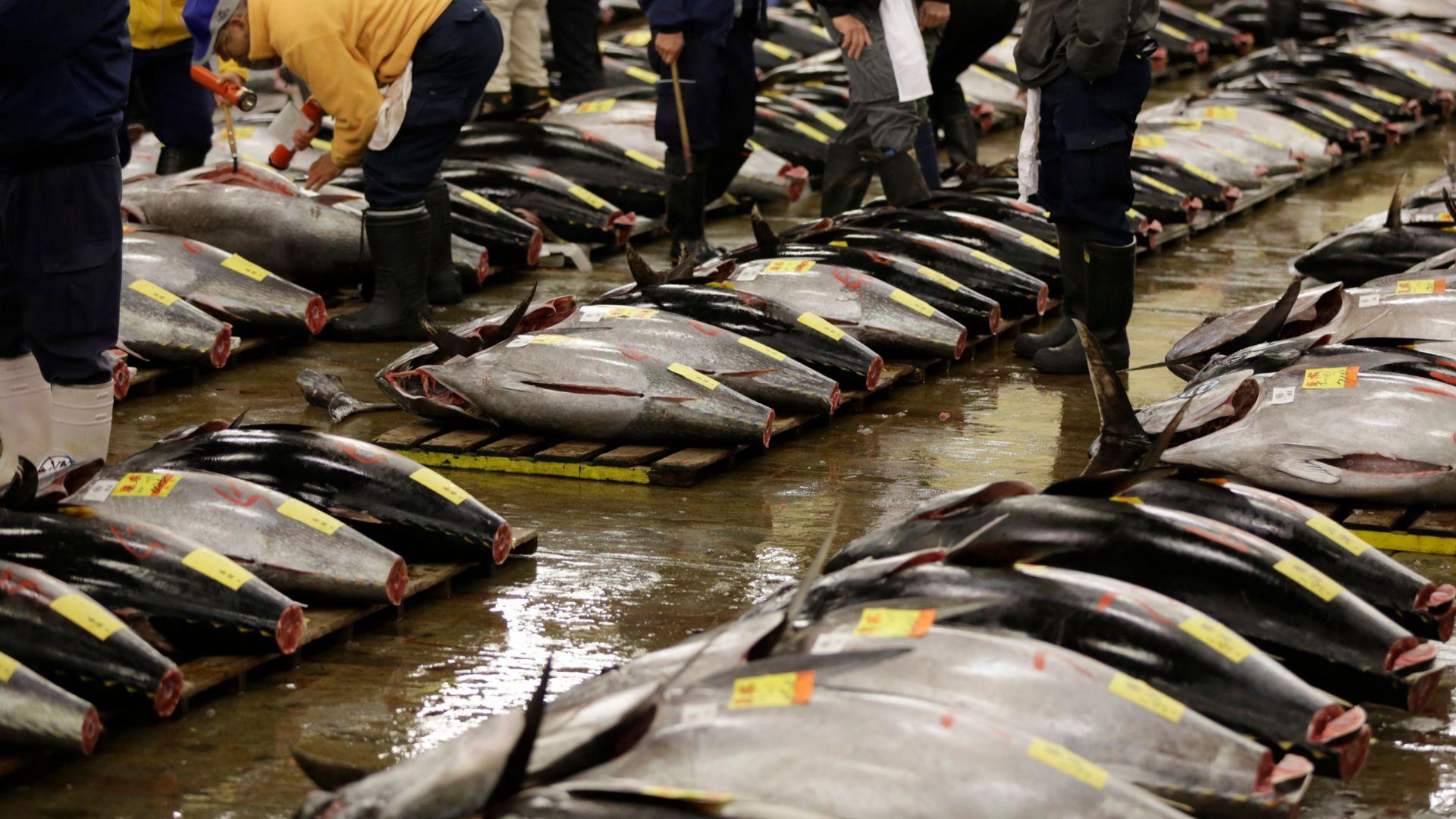 В Токио отново допускат зрители на прочутите търгове за риба тон