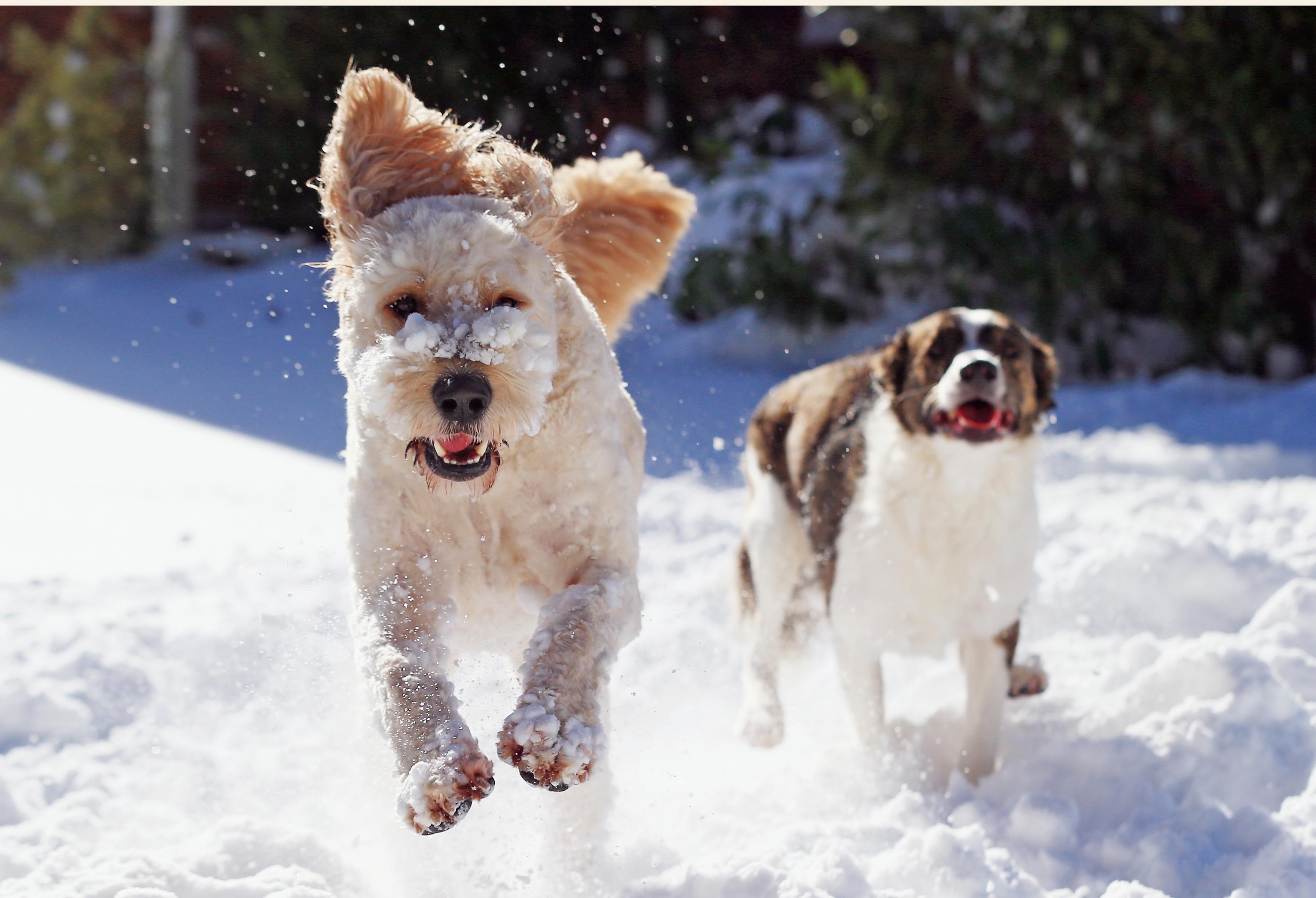 Как да предпазим животните при ниски температури