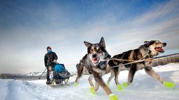 Невероятният живот на кучетата Хъски, които дърпат шейните