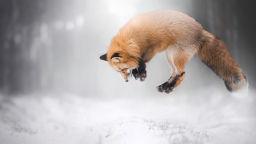 Свободният дух на животните в снимките на Алиця Жмисловска
