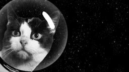 Тайната история на първата котка в Космоса