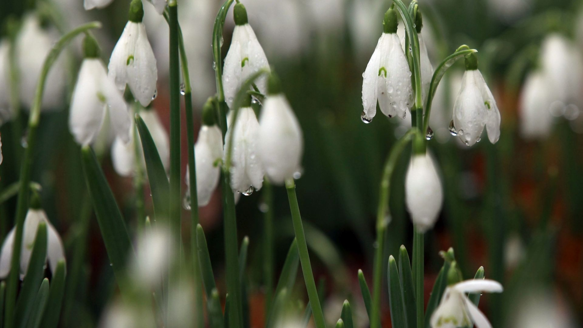 Идва топла пролет, но ще има и сняг през март