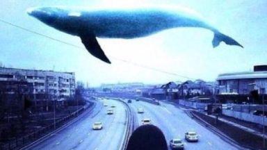 """Смъртоносната виртуална игра """"Синия кит"""" вече има алтернатива - """"Бялата мечка"""""""