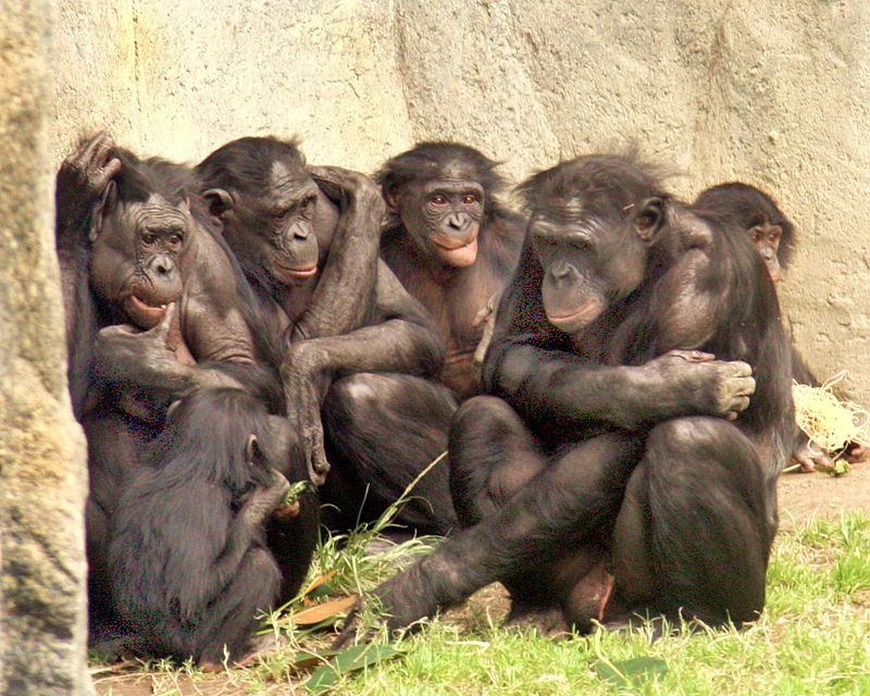 Смели маймуни не се дадоха на крадци