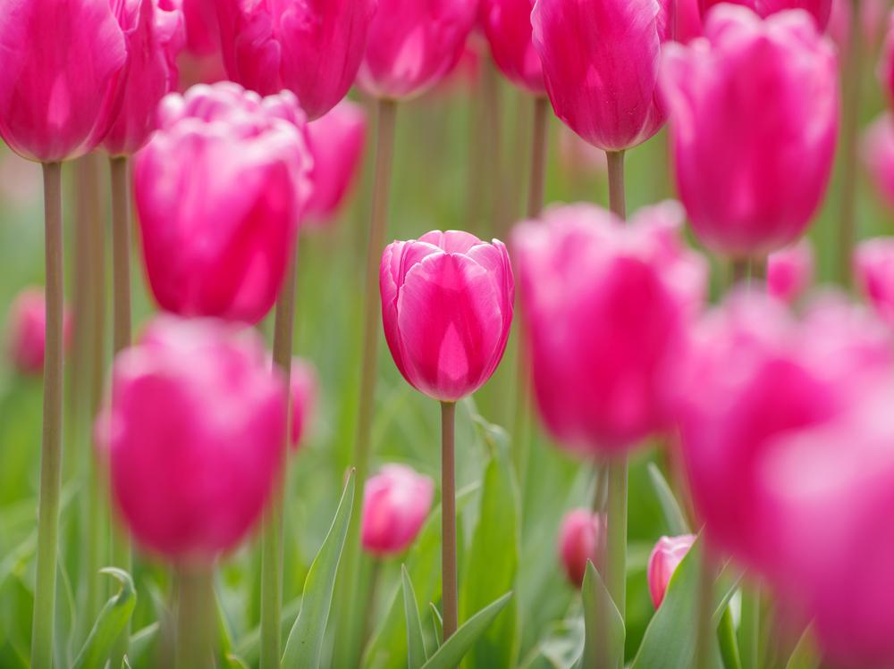 Пролетта иде с хубаво време