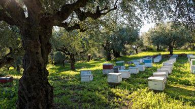 Пчеларите искат компенсации и санкции заради отравянията
