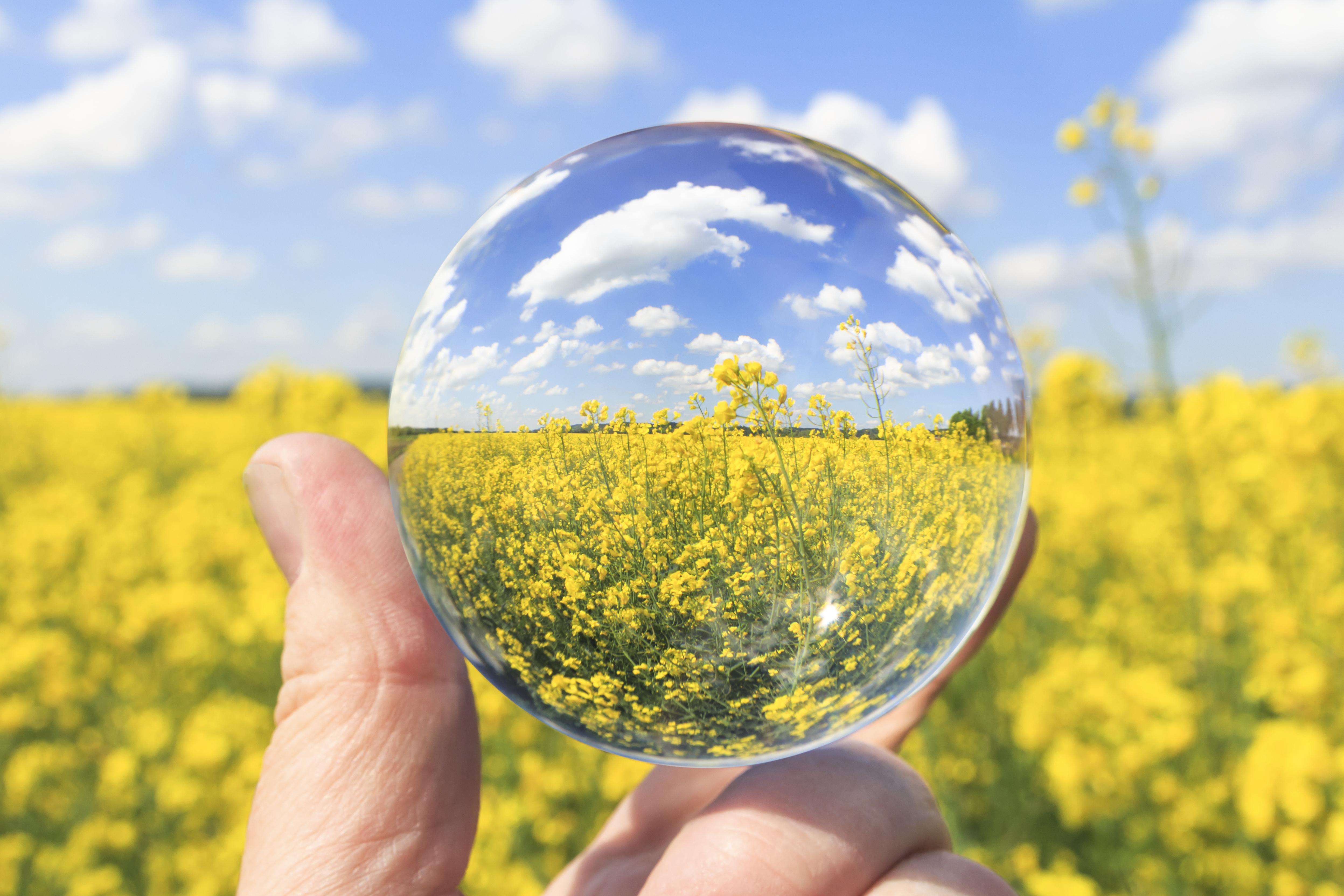 34% ръст на площите за биоземеделие за 7 г.