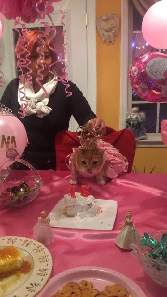 Да станеш на 15 - празникът на една котка