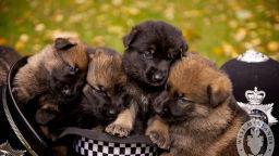 Вижте превъзходни кучета в техния първи ден на служба