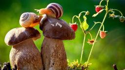 Приказка за природата, която ни връща в детството