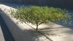 Удивителни фотографии на дървета, които не искат да умрат